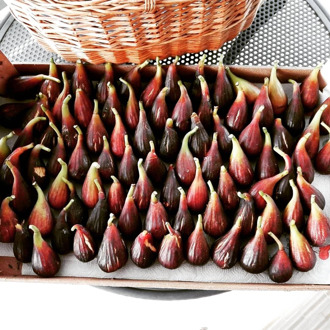 Il fico: frutto di fine estate